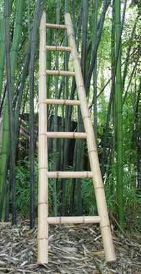 Bamboo Ladder Arch! | The Treasured Petal Blog