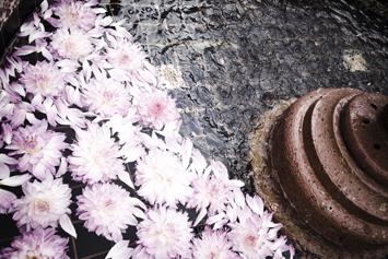dahlia-fountain