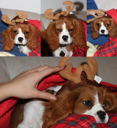 pesto_antlers
