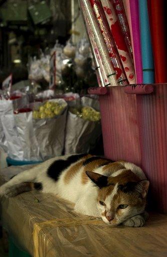 A flower market kitty.