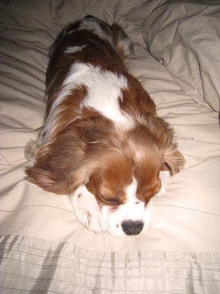 pesto-sleeps