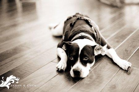 ashlee dog