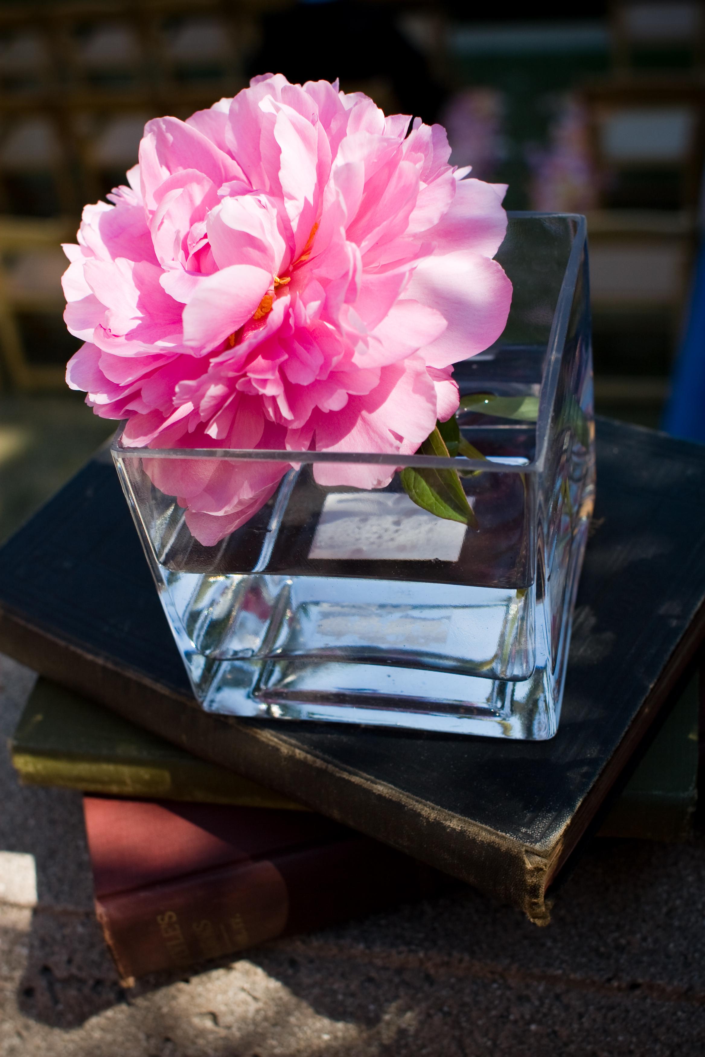 Ugly Pretty Flowers The Treasured Petal Blog