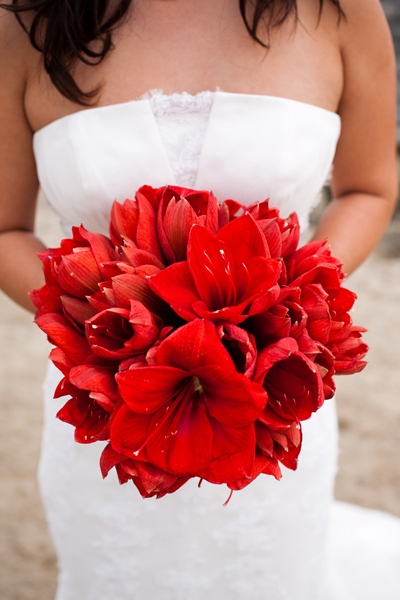 Her bouquet a ruby red nosegay of amaryllis JUST amaryllis